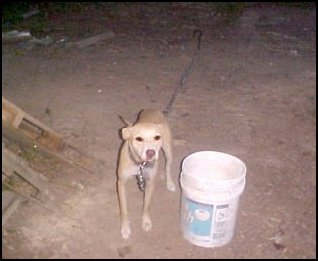 Unchain Your Dog org | Animal Cruelty Photos, Chained and